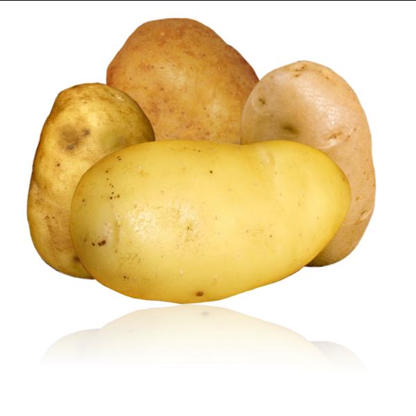Variété de pomme de terre pour frites parfaites